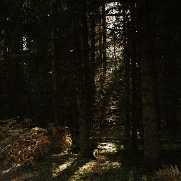 Priscillia Hervier, sortie en forêt, avec une belle lumiere de fin de journée